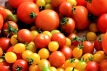 tomatoes-1569280_640